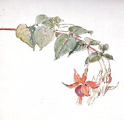 Flower Sketch by Beatrix Potter